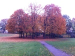It is so fall in Hamburg