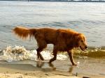 Dog love andloss