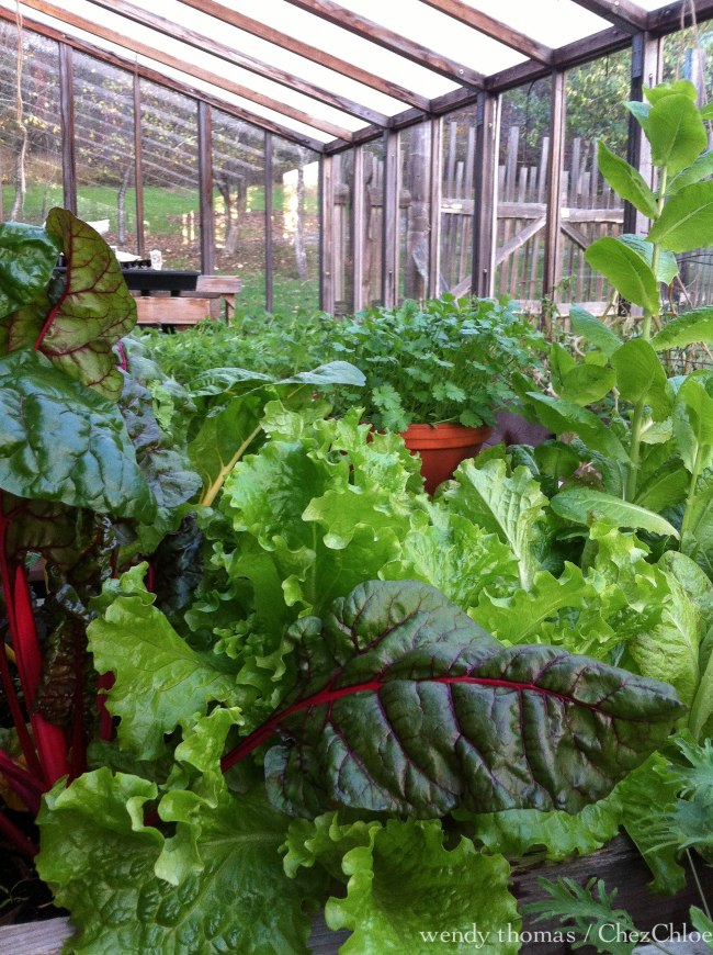 salad greens greenhouse