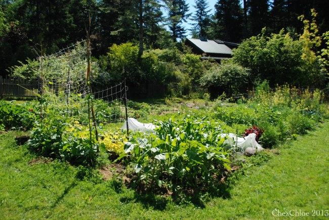 Garden 7-7-2013-3
