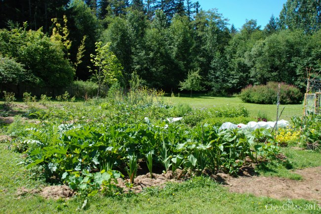 Garden 7-7-2013-4