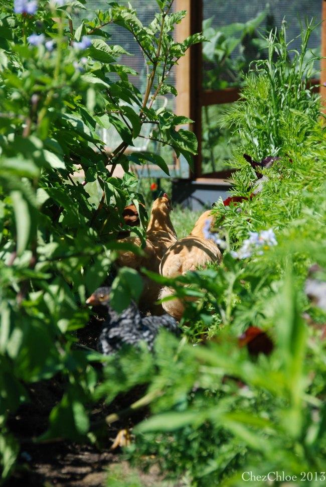 Garden 7-7-2013-5