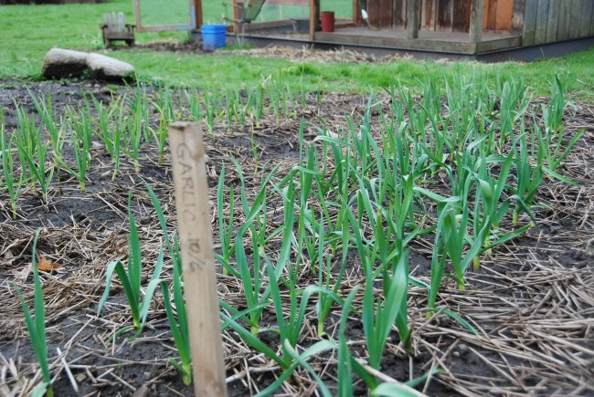 spring happenings 2014 wendyellenthomas.com-4