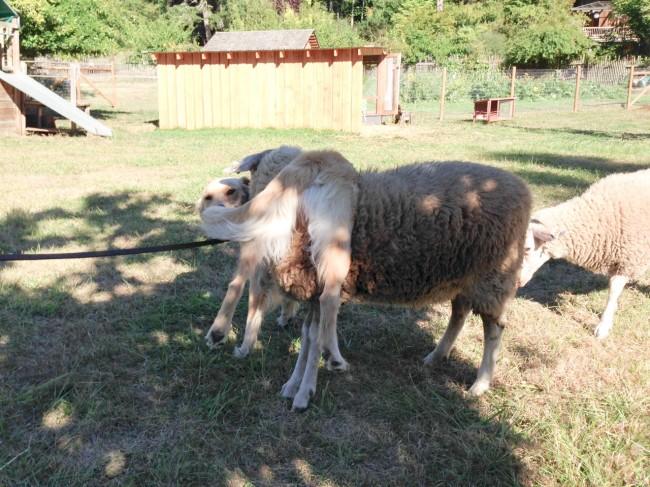 Otis and Helen 2-3