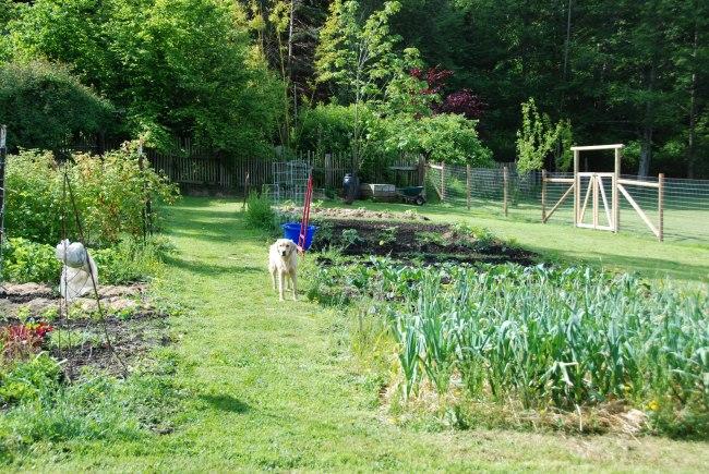 early spring garden-13