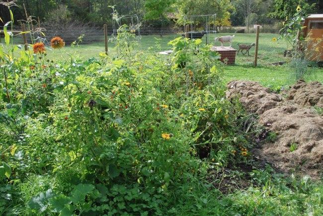 Sept garden-5