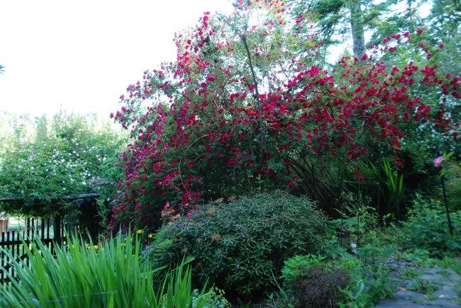 garden 6-4-15-3
