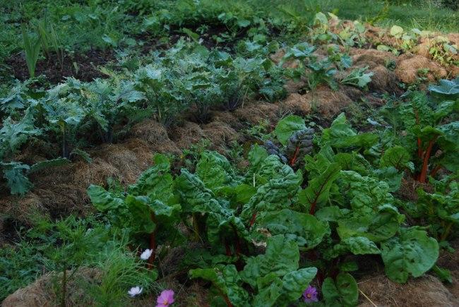 garden 6-4-15-8